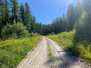 Hiking Flathead National Forest: Forest Service Road photo of entrance