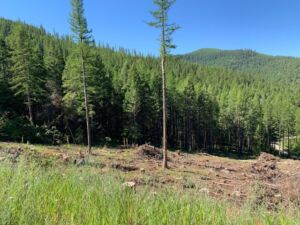Hiking Flathead National Forest: Forest Service Road photo of logged area