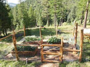 Rural Kalispell land photo of veggie garden