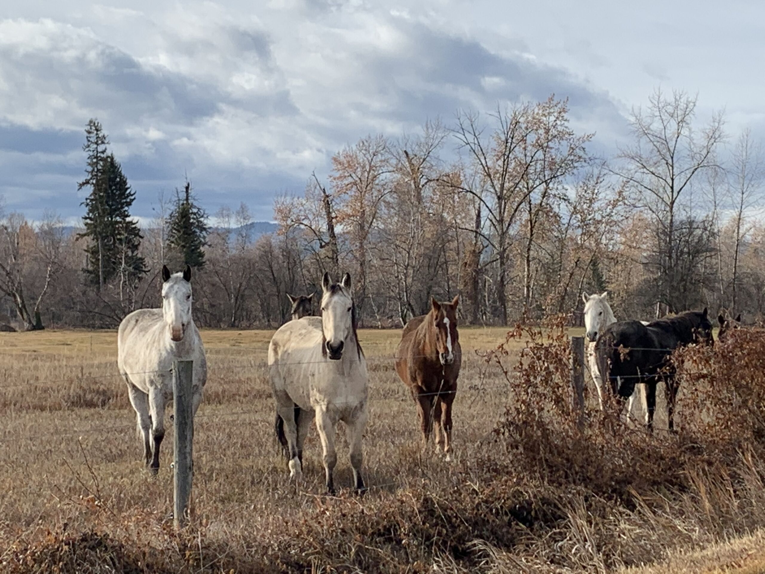 So you want land with views? photos of horses